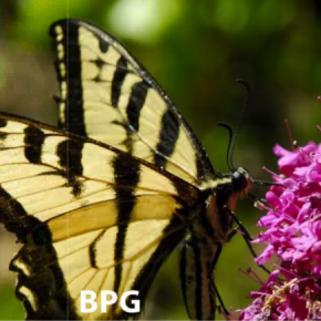 BPG Formato Superior